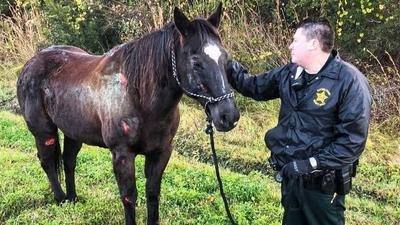 Offers pour in to adopt mystery horse found bloodied, banged-up along busy Florida highway