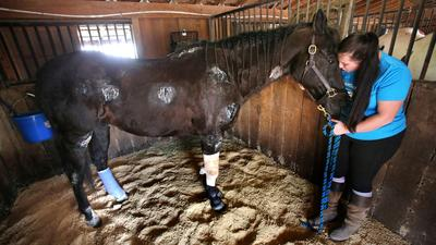 Meet 'Highway,' a horse who survived a high-speed fall from a trailer