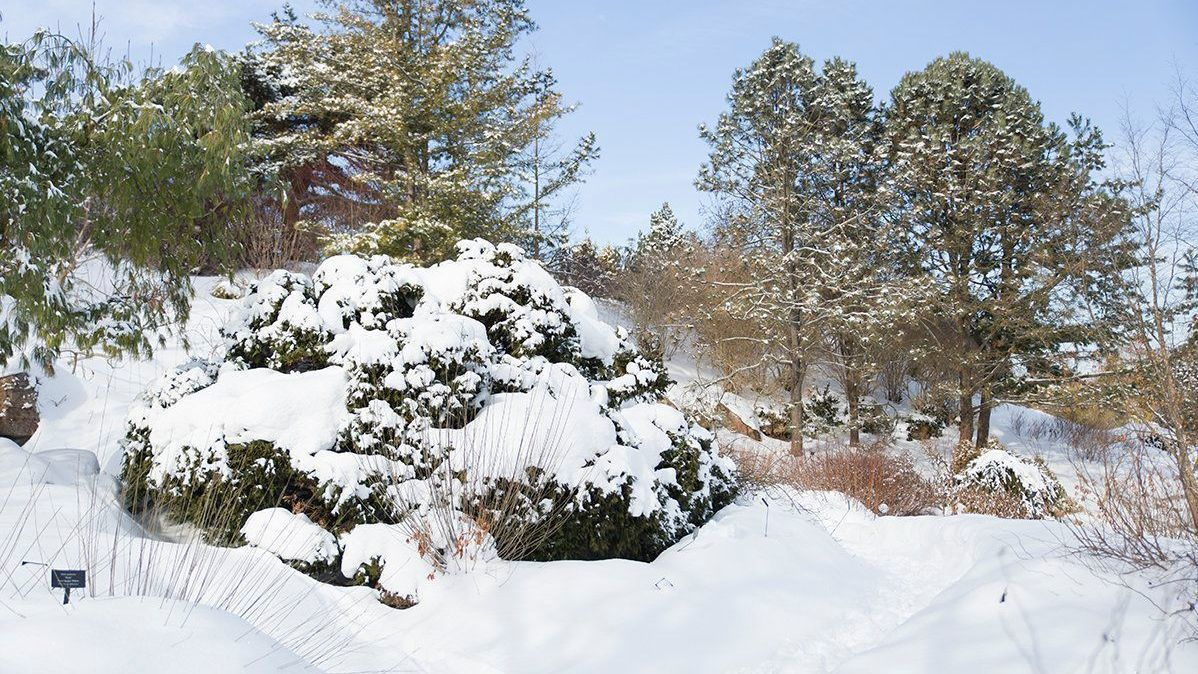 Snow, cold weather are not cause to worry about your garden