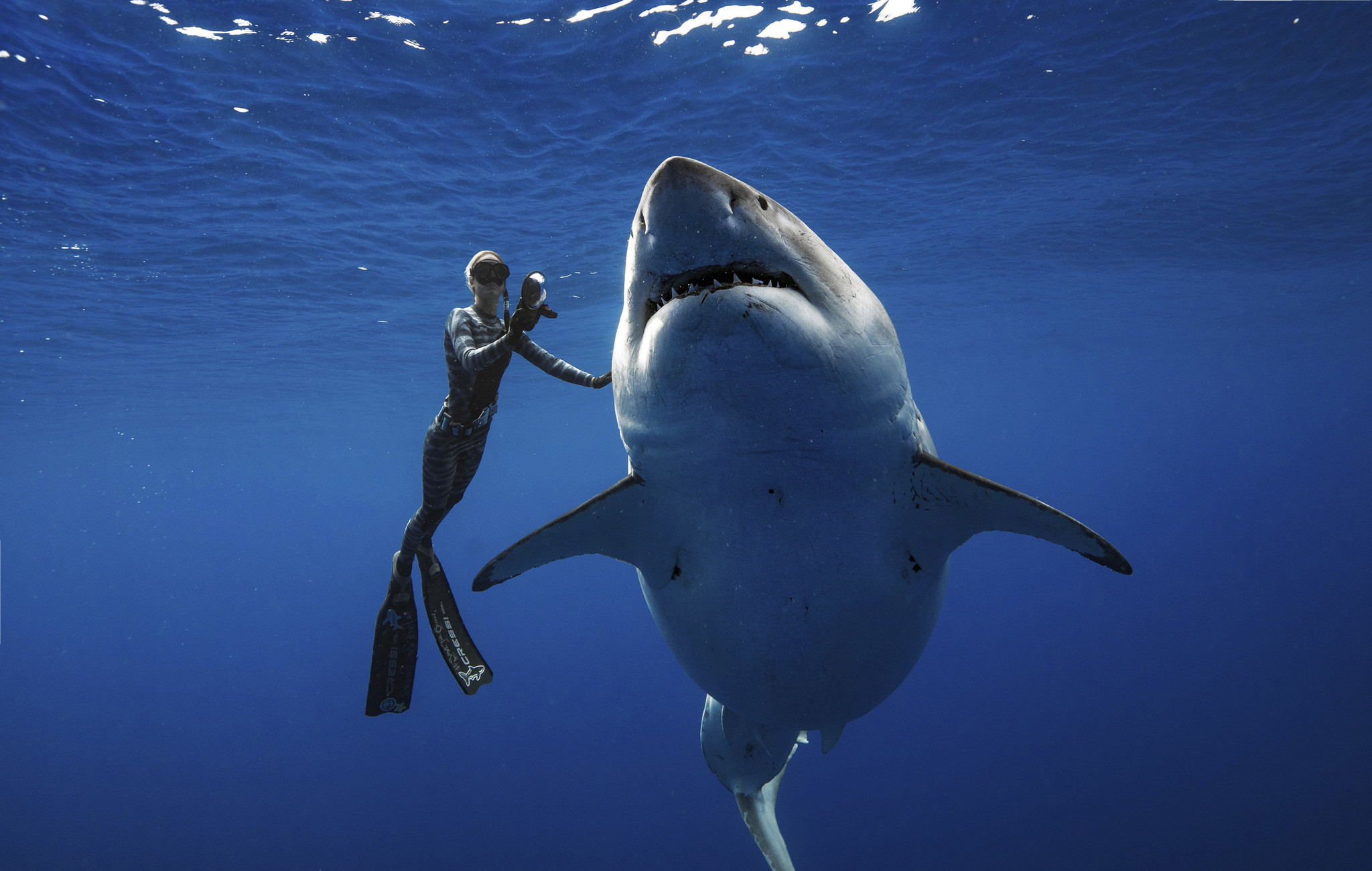 Researchers come face-to-face with what could be one of the largest great white sharks ever recorded