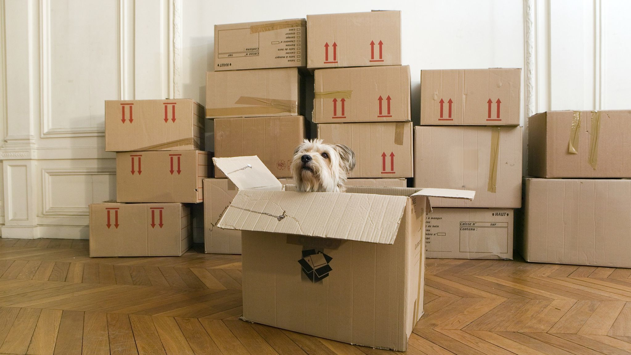 Surprises and mortgages from the 'seventh circle of hell': Things I wish I knew before buying my first home