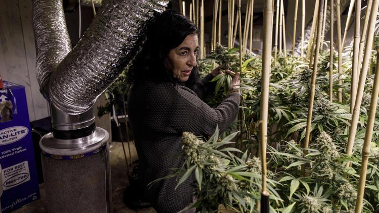 Michigan legalizes marijuana