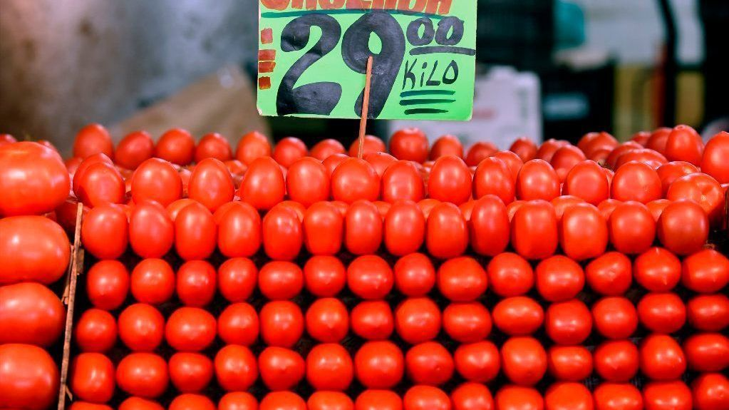 Save Florida tomatoes: Probe dumping by Mexican exporters and end unfair trade practices | Editorial