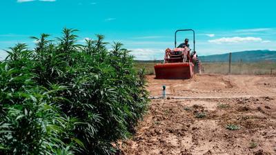 'A new cash crop': Florida readies for billion-dollar hemp market