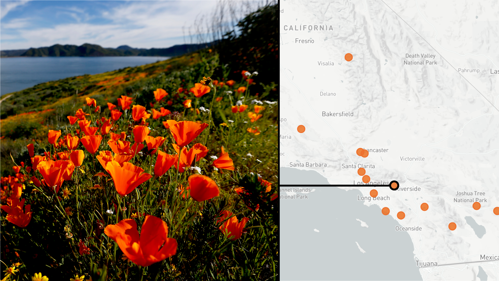 Where to find the super blooms in Southern California