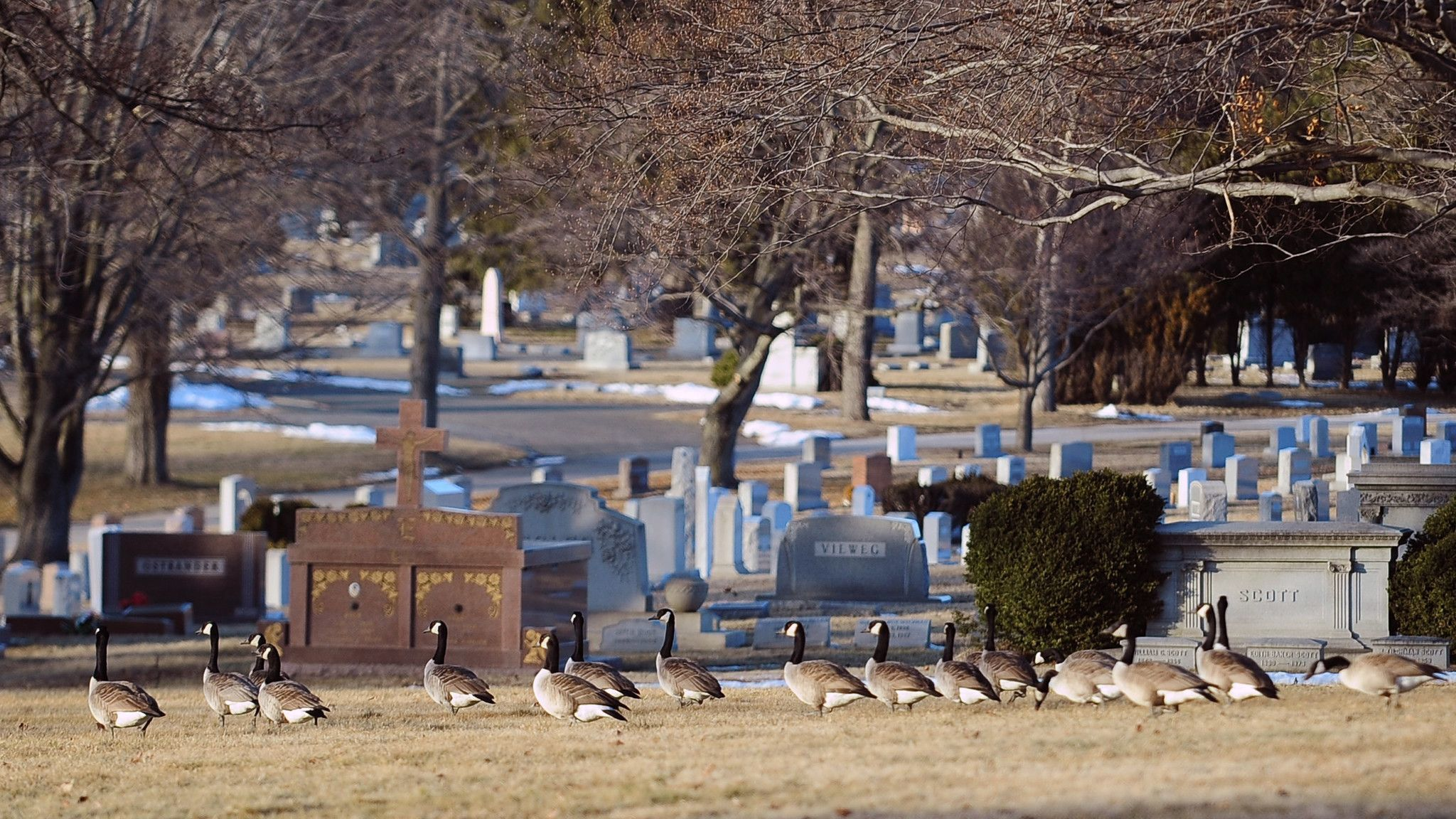 State senator to withdraw bill that would allow development at Pikesville cemetery