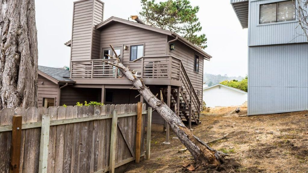 Who is liable when a tree falls on neighbor's property?