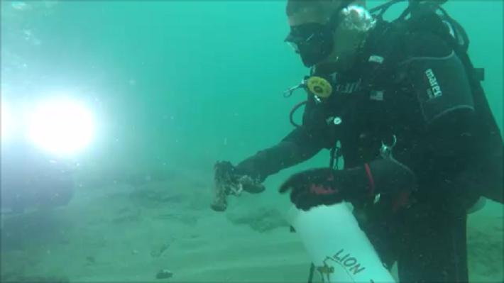 Divers take aim at underwater trash and find gun on ocean floor