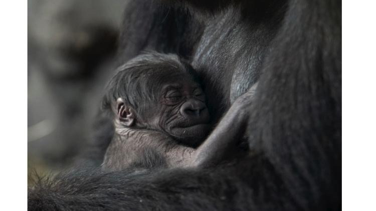 Pictures: Baby animals at the zoo