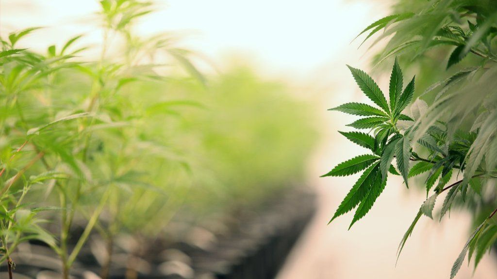 Illinois marijuana legalization proposal unclear on what information about pot companies could be kept secret