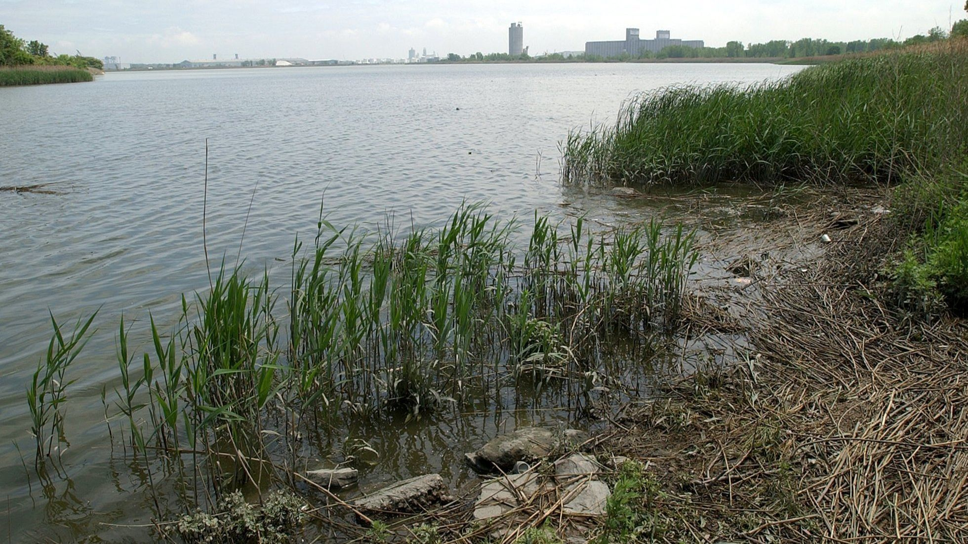 Asian carp DNA found in Lake Calumet, only 7 miles from Lake Michigan