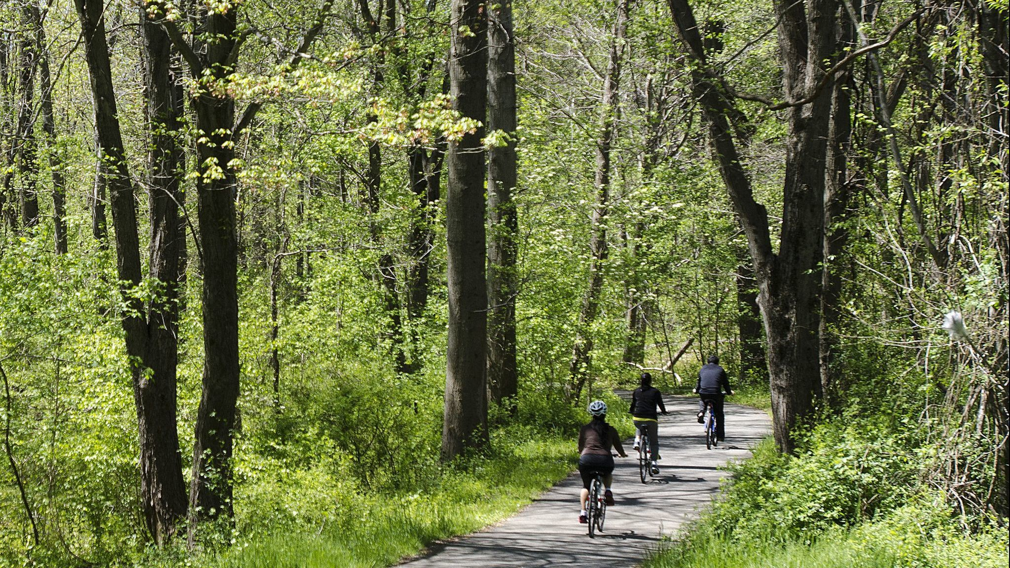 Work to clear trees on Patuxent Branch Trail in Howard County to begin June 24