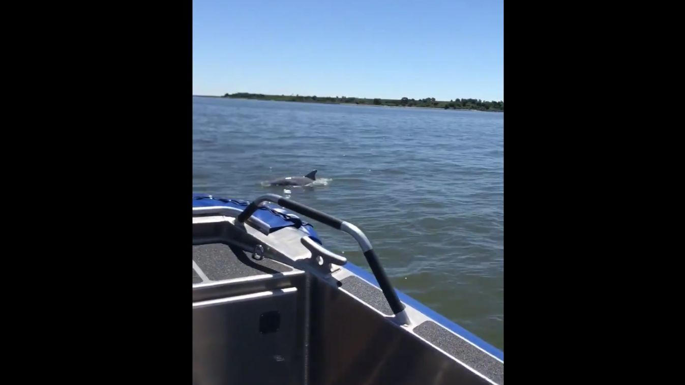 Dolphins were spotted near Essex by Baltimore County police