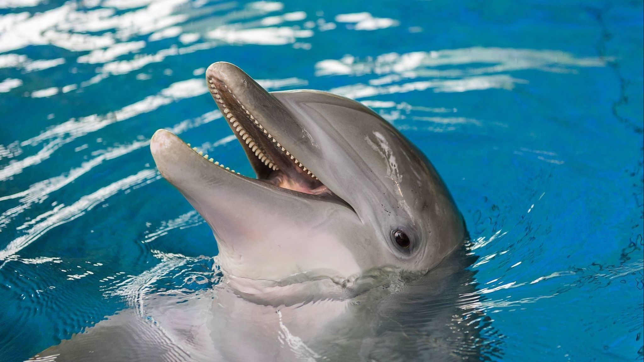 Dolphin dies at the National Aquarium after months-long illness