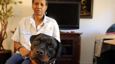 Oct. 23: Rottweiler service dog