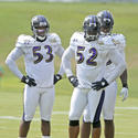 Jameel McClain, Ray Lewis, Terrell Suggs