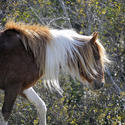 10. Pony up. Visit nearby Assateague Island to see the wild ponies.