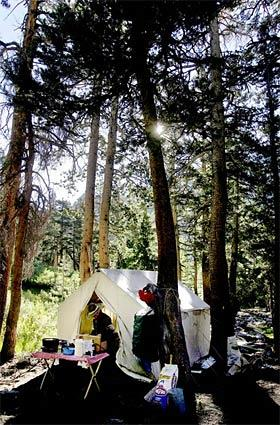 The kitchen tent is set up amid pine trees at the wilderness base camp. No beef jerky or cold beans for this crew. Practically everything but the kitchen sink is hauled along on these pack trips into the Sierras.