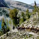 Line of riders travel a remote trail