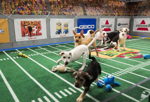 Dogs score touchdowns on a 10-by-19-foot gridiron carpet when they cross the goal line with a toy.