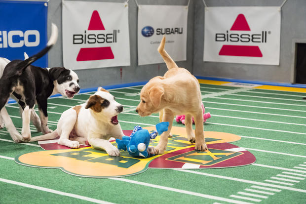 """Puppy Bowl,"" an annual two-hour TV special that mimics a football game with canine players, made its debut eight years ago on Animal Planet."