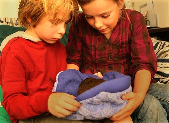 "Zander and Hannah cuddle up to one of the guinea pigs. ""There's been a real proliferation in the number of rescues around the country,"" said Teresa Murphy, founder of Cavy Spirit. She estimated that 20 to 30 large-scale guinea pig rescue operations have been established nationwide, each with at least 50 animals in their care at any given time. Smaller rescues are expanding too, she said."