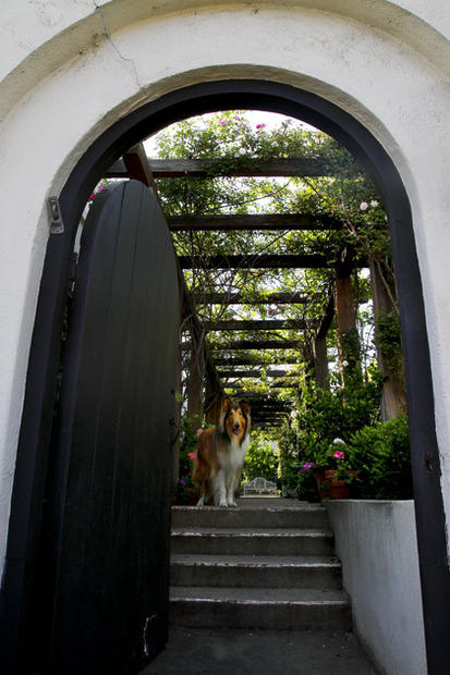 By Barbara Thornburg<br /> Becker's collie, Ned, stands at the entrance to the long, narrow garden. The pergola runs the length of the building that now houses Becker's architecture office and home.