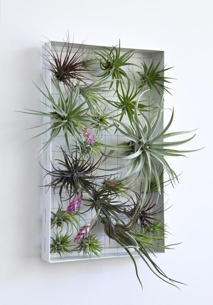 Create a living wall by attaching Tillandsia air plants to stainless steel cables strung on a lightweight, powder-coated aluminum frame designed by landscape architect Josh Rosen of Airplantman Designs. It measures 11.5 inches by 19 inches and is sold without plants. 