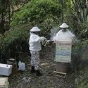 Silver Lake beekeepers