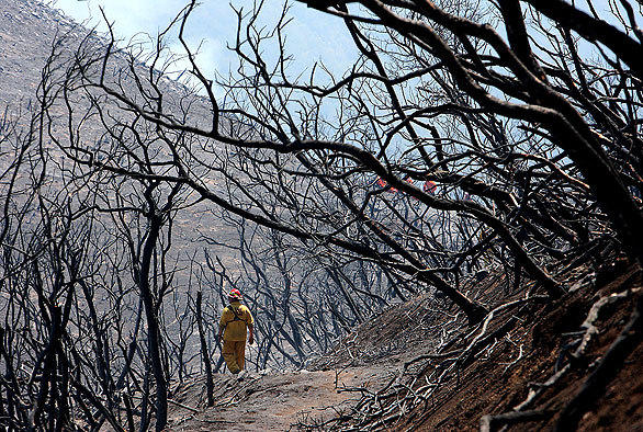 Scorched manzanita and bare dirt are all that remain where hundreds of acres of brush burned near Gibraltar Road in Santa Barbara. <br><br>