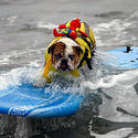 Surf City Surf Dog