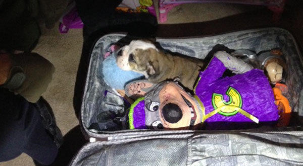 Harpo was found unharmed inside a closed suitcase.