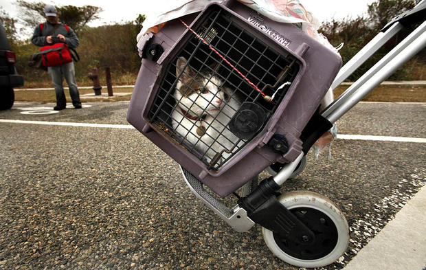 A cat is safely evacuated from Breezy Point.