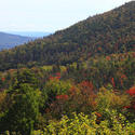 Leaf peepers' delight