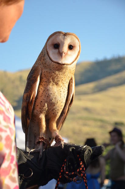 Alongside Riverwalk Park in Chelan, Wash., a farmers market sets up shop on Thursday nights in summer. On the night we visited, a volunteer brought a barn owl to raise awareness of the birds' habitats and habits.