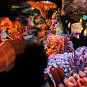 7. The Seas With Nemo and Friends