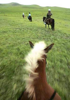 Paniolo Adventures Horseback Riding on the Big Island offers 90-minute sunset rides on the Ponoholo Ranch of historic Kohala Mountain.