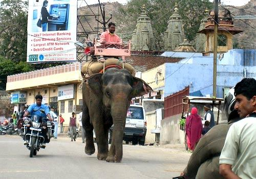 An elephant takes life in a slower lane — or perhaps makes its own lane — in Jaipur, one of the points in India's Golden Triangle, a 430-mile tourist route that includes Delhi and the Taj Mahal in Agra. Ringed by rough-edged hills, Jaipur features a striking town center known as the Pink City, named for the color it was painted for a 19th century visit from Prince Albert, and the City Palace, built in the early 18th century by Jaipur founder Maharajah Sawai Jai Singh II.