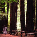 7. Muir Woods, Calif.