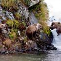 74. Kodiak bears on Kodiak Island, Alaska