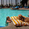 Dog-friendly hotels in Southern California