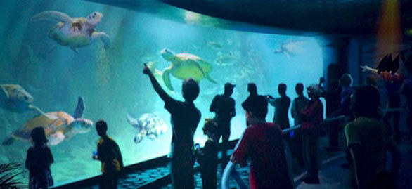 Before loading into the TurtleTrek 3-D theater, SeaWorld Orlando visitors will pass an aquarium filled with saltwater fish and sea turtles.