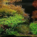 2007 AGA Aquascaping Contest