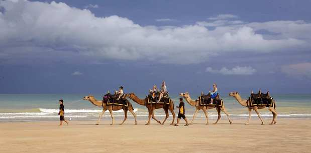On Cable Beach, camels, introduced as pack animals, take visitors for rides daily. The beach  in Broome, Australia, has 13 miles of white sand.