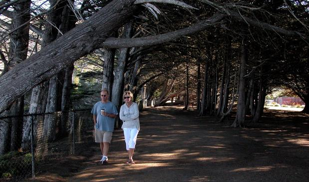 Visitors stroll under a canopy of cypress trees at the Ragged Point Inn.