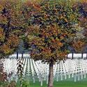 Linden trees border rows of crosses at Meuse-Argonne, the largest U.S. military cemetery in Europe.