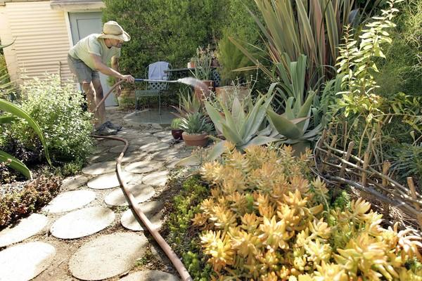 With his landlord's encouragement, Duell threw himself in to landscaping the small strip of soil next to his rented back house. The garden now features a wild mix of succulents, agave, California natives and rock solid plants such as catalina ironwood.