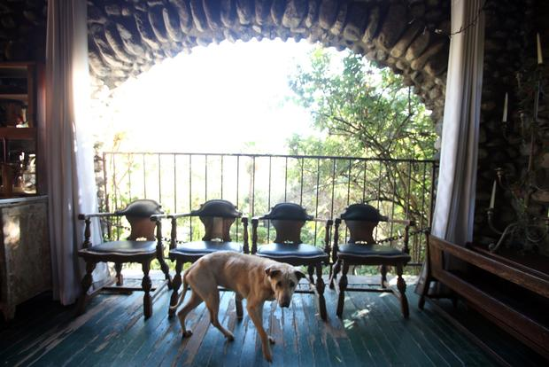 Framed by a stone arch lining the front porch, the family's17-year-old Shar-Pei and Lab mix, Lucy, seems the perfect fixture for the 1904 Arts and Crafts house.
