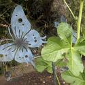Amy Brenneman's children's garden: Butterfly