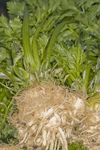 Italian celeriac grown by James Birch in Three Rivers, at the Santa Monica farmers market.